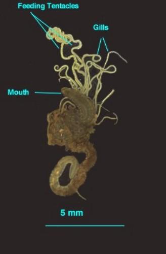 Image6 - Parasite???