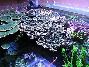Tank Of The Month June 2003 Reefkeeping Online Magazine