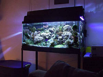 Tank of the month january 2004 reefkeeping online for 40 gallon fish tank dimensions