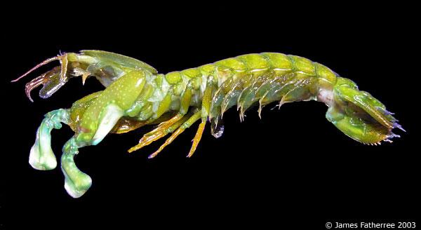 虾动物单个图片