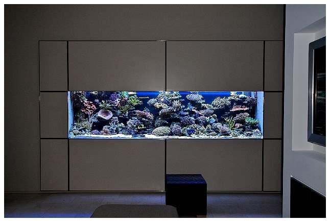 Aquarium Modern Archives Modern Aquarium Design For
