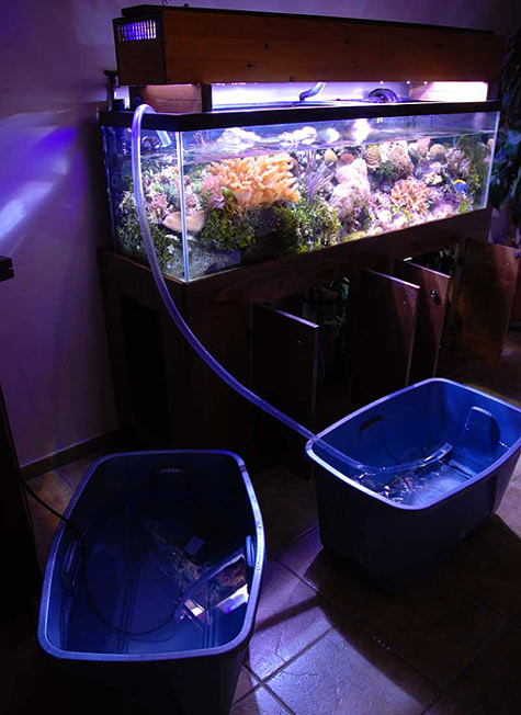 Saltwater aquarium water changes water changes 2017 for How to change fish tank water