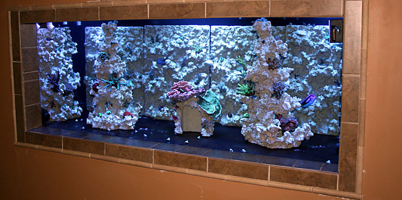 Tank-first-setup-rockwork.jpg