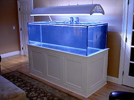 Tank of the Month - March 2009 - Reefkeeping.com