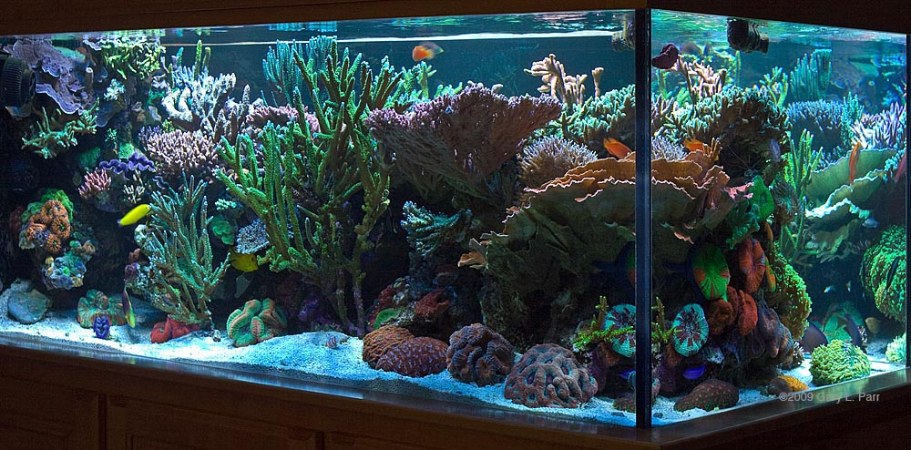 Reefkeeping magazine tank of the month for Cheap fish tanks for sale