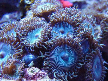 mucho-reef-1