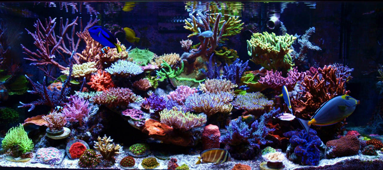 Reefkeeping magazine december 2012 tank of the month for Reef tank fish