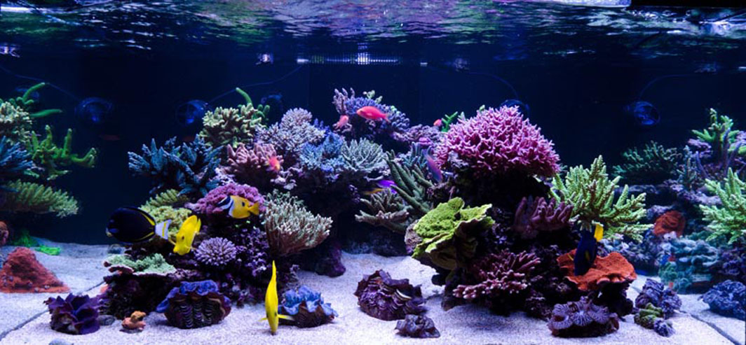 Image gallery reef tank for Saltwater fish tank