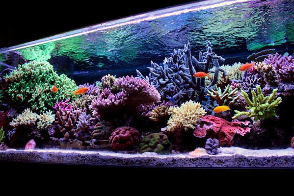 Reefkeeping magazine tank of the month for Acheter aquarium recifal